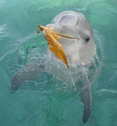 dolphin with leaf